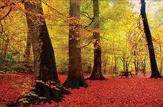 Yedigöller-the seven lakes best in autumn...(Turkey)