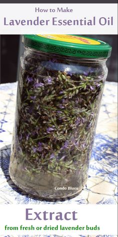 How to Make Lavender Essential Oil Extract Maybe for next year, my lavender plant did not do so well Lavendar Oil, Lavender Buds, Lavender Plants, Drying Lavender, Lavender Hair, Lavander, Lavender Fields, Making Essential Oils, Essential Oil Blends