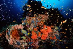 Papua New Guinea is believed to have some of the best diving sites in the world with more species than the Red Sea and the Caribbean.