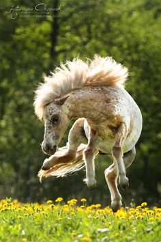 When you're thinking about getting a cute little pony for your kids......Here's one in action.......i did not know horses could do that