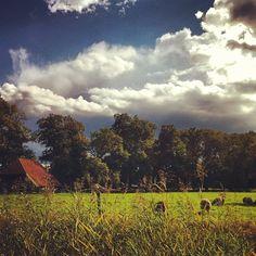 #clouds over #sheep in #twickel #delden #rain #cloudlovers #sky #skylovers - @marcel_tettero- #webstagram