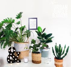 Urban Jungle Bloggers: Creative Plant Pots by @katekuhar