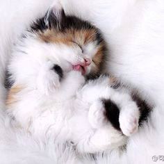 Cutest kitten napping on its back