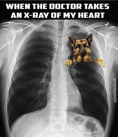My heart is full of ALL my fur babies ❤❤❤❤❤❤❤ Pet Loss, German Shepherds, German Shepherd Puppies, Pastor, I Love Dogs, Cute Dogs, Funny Dogs, Dog Photos, Dogs Of The World