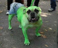 Lustige Halloween Kostüme für Hunde oder Katzen: Dog Hulk.