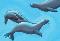 #Children's Wall Mural #Ocean Wall Mural #Seals Wall Mural #Ocean themed children's room decor