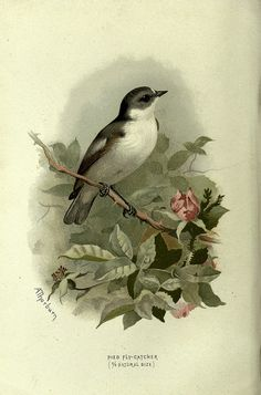 n73_w1150 by BioDivLibrary, via Flickr