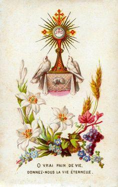 Beautiful vintage image of the Eucharist. Catholic Art, Catholic Saints, Roman Catholic, Religious Images, Religious Art, Religious People, Catholic Sacraments, Vintage Holy Cards, Les Religions