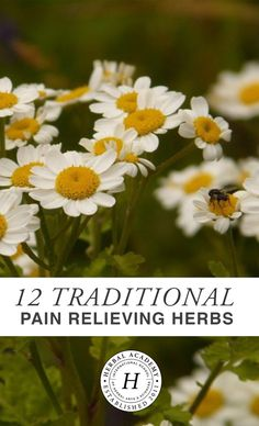 Learn about 12 Pain Relieving Herbs traditionally used by herbalist to help soothe pain including muscular aches, nerve pain, discomfort from arthritis, and more!