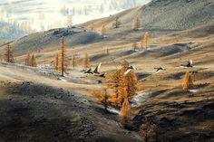 Летят перелетные птицы в осенней дали голубой, Летят они в жаркие страны, а я остаюся с тобой... © Андрей Ершов
