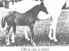 Obra as a foal