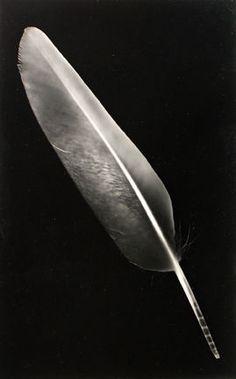 RAYOGRAPH (FEATHER), 1940's  Emmanuel (Man Ray) Radnitzky