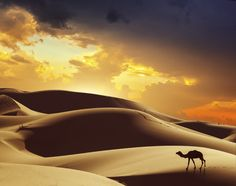 Gold dunes and golden skies are everywhere in Morocco's eastern desert.