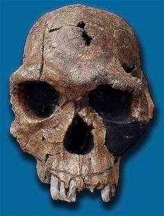 Human Ancestors - Homo Group