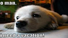 need vacation - Cerca con Google