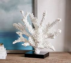 White Spike Coral | Pottery Barn