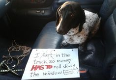 dogshaming: Stinky Doxie This is Baloo, my Black and Tan Piebald Dachshund. He will fart in the vehicle EVERY TIME to get… View Post Piebald Dachshund, Dachshund Love, Dachshund Humor, Animals And Pets, Funny Animals, Cute Animals, I Love Dogs, Cute Dogs, Game Mode