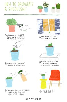 Amazing! How to propagate succulents.