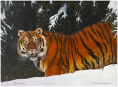 Tiger Paintings On Canvas | TIGER (2009) 30 x 40 in. Oil on canvas.