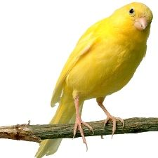 ...  very important when selecting a bird cage for a Canary for any small birds…