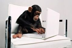 funny chimpanzee and his computer