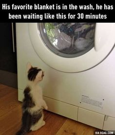 """This kitty has an attachment issue <a class=""""pintag searchlink"""" data-query=""""%239gag"""" data-type=""""hashtag"""" href=""""/search/?q=%239gag&rs=hashtag"""" rel=""""nofollow"""" title=""""#9gag search Pinterest"""">#9gag</a> @9gagmobile  Follow 9GAG for more funny pictures."""