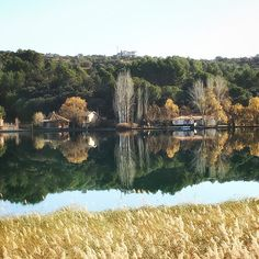 Estoy harto de tantos reflejos  Laguna del Rey Ruidera #nature #photography