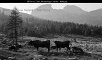 006ph-00835 Mountains, Nature, Cow, Photography, Naturaleza, Nature Illustration, Outdoors, Bergen, Natural