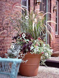 From BHG: A. Purple fountaingrass (Pennisetum setaceum 'Rubrum') -- 2 B. Coleus (Solenostemon 'Sun Velvet Red') -- 3 C. Plectranthus 'Variegatus' -- 2 D. Impatiens 'Dazzler Pink' -- 2 E. Licorice plant (Helichrysum petiolare) -- 2