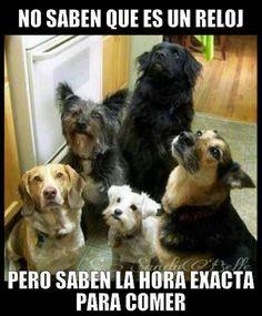 Perros... Idiotas sabios