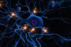 Bildresultat för vagus nerve