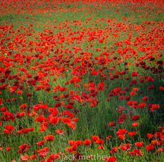 https://flic.kr/p/vURpZj | Poppy field in Ile de Re (tribute to Claude Monet)