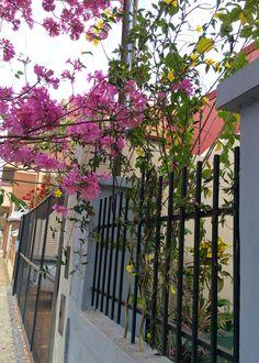 Colorida vereda . Asunción-Paraguay