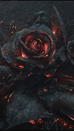 As part of a reference photoshoot for an illustration project by Warsaw-based creative studio Ars Thanea, a bouquet of roses was set on fire and photographed as they smoldered in the dark.