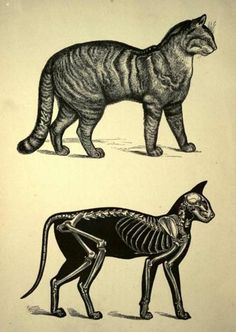 inside of cats there are bones, via ffffound via poultergeist