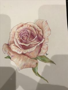 #roze#pencils# caran d'ache luminance# drawing