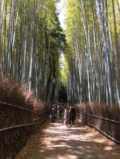 Kyoto, Railroad Tracks, Explore, Train Tracks, Exploring