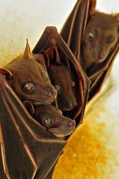 Oh. My. Goodness.  Cuteness overload! LOVE bats!