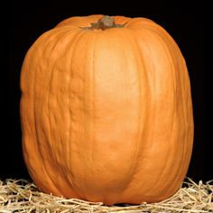 A craftable pumpkin is very good for you to use. 31 Day of Frights: Pumpkins That Don't Rot