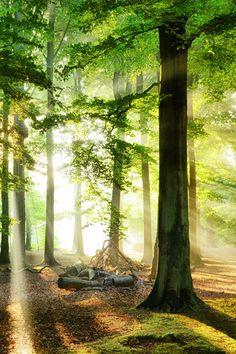 One Day in the Forest (Holland) by Lars van de Goor