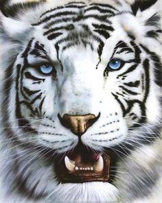 Em Extinção Tigre Branco (Panthera tigris)      O URRO INFRASONICS   O urro do Tigre é tão poderoso e aterrorizante que paralisa a ...