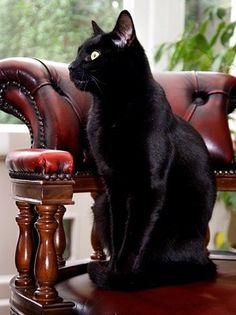 Black cat always look perfect ^^