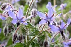 5 fleurs utiles au jardin