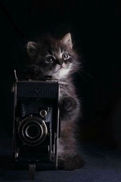 Looks like a cat that loves to take pictures.