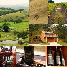 """Featured Winery October 2012    Yileena Park Yarra Valley  """"There is only one Cabernet King"""""""