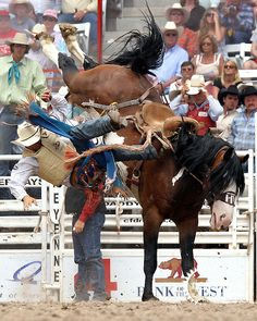 Harry Vold Rodeo Company | comes up short of the 8 second time on the Harry Vold Rodeo Company ...