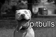 Pitbull love. Best smile in the world