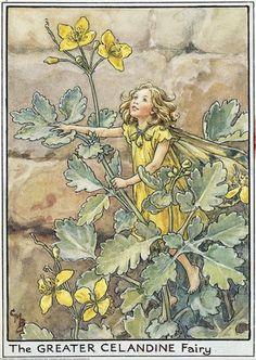 Коллекция картинок: Flower Fairies