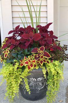 My Coleus creation for this Summer - Garten und Pflanzen - Plants Garden Yard Ideas, Diy Garden, Garden Planters, Garden Projects, Potted Plants Patio, Planters For Front Porch, Front Porch Flowers, Potted Plants For Shade, Planters For Shade
