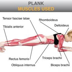 plank roll down muscles used - Google Search | crossfit, planks ...
